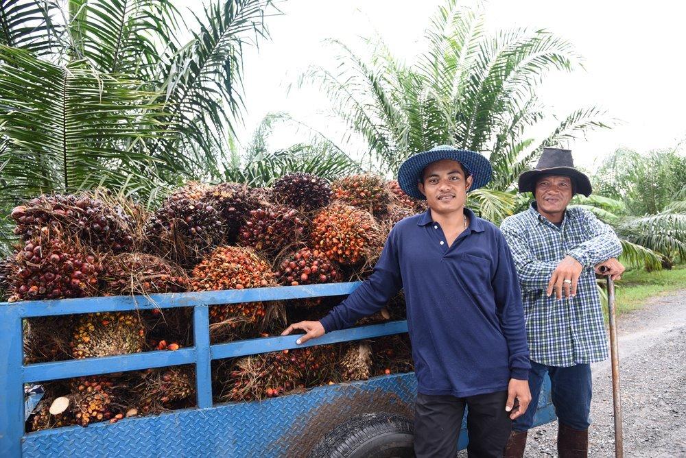 บางจากฯ รับซื้อน้ำมันปาล์มดิบ 13,500 ตัน ช่วยเหลือเกษตรกรไทย