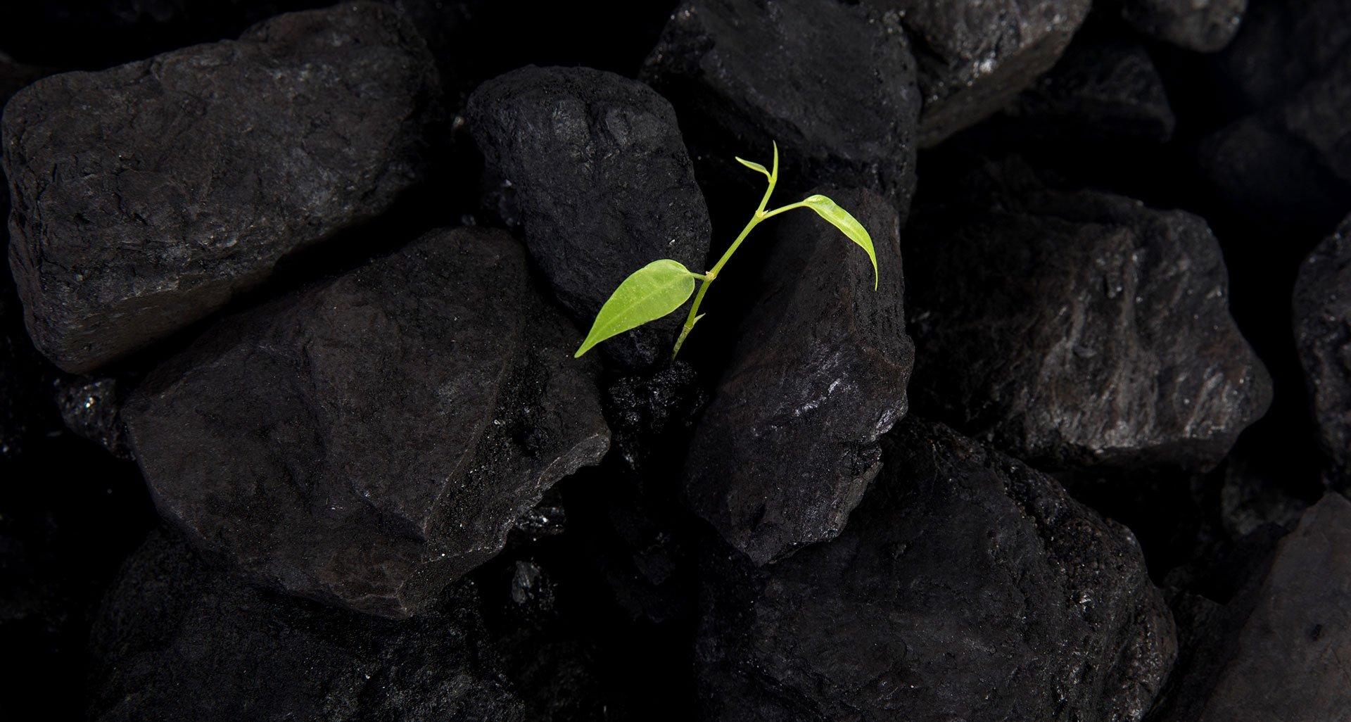 คาร์บอนสีเขียว