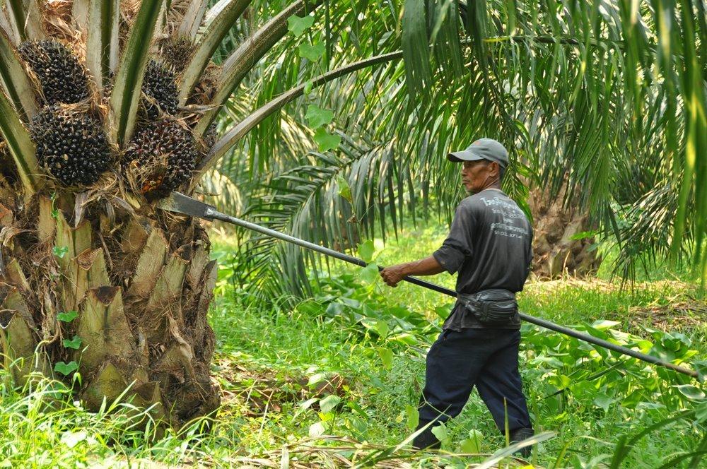 บางจากฯ ซับน้ำตาชาวสวนปาล์มรับซื้อน้ำมัน ไบโอดีเซล และน้ำมันปาล์มดิบ เพิ่ม 6 ล้านลิตร สนองนโยบายรัฐ